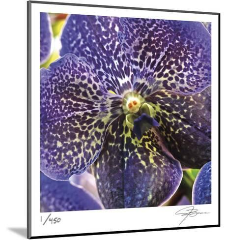 Orchid Square-Ken Bremer-Mounted Limited Edition