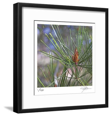 Pine Bud-Ken Bremer-Framed Art Print