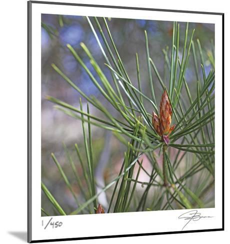 Pine Bud-Ken Bremer-Mounted Limited Edition