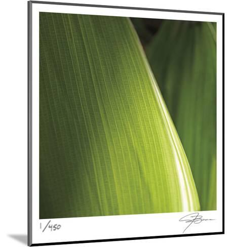 Palm Blades-Ken Bremer-Mounted Limited Edition
