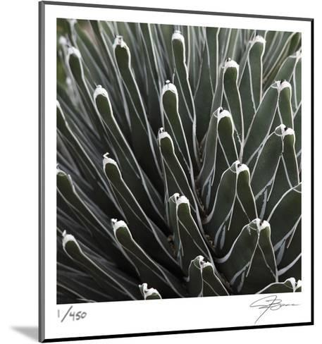 Cactus 34-Ken Bremer-Mounted Limited Edition