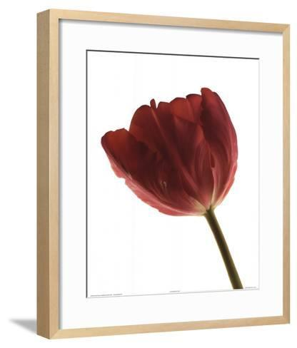 Red Tulip-Art Photo Pro-Framed Art Print