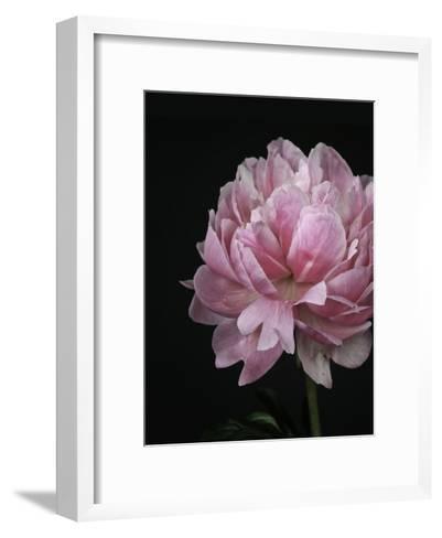 Floral Closeup 4-Kimberly Allen-Framed Art Print
