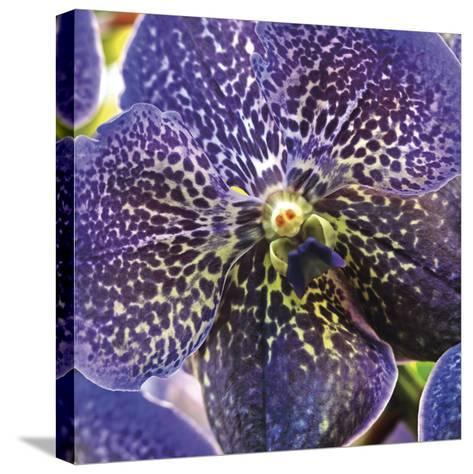 Orchid Square-Ken Bremer-Stretched Canvas Print