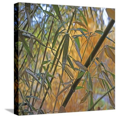 Bamboo-Ken Bremer-Stretched Canvas Print