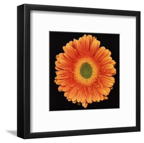 Radiance-Harold Feinstein-Framed Art Print