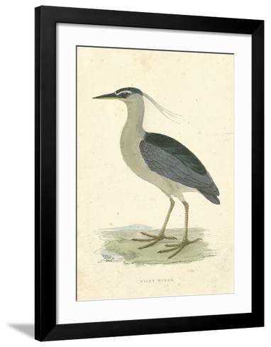 Vintage Night Heron-Morris-Framed Art Print