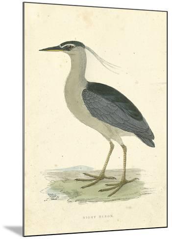 Vintage Night Heron-Morris-Mounted Giclee Print