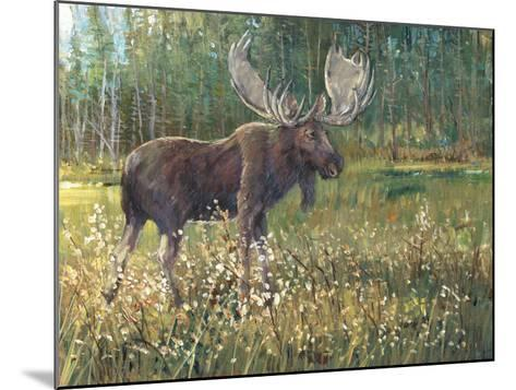 Moose in the Field-Tim O'toole-Mounted Art Print
