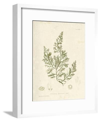 Cystoseira faeniculacea-Henry Bradbury-Framed Art Print