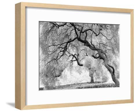 Enchanted Forest--Framed Art Print