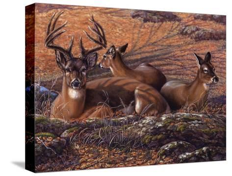 Bed of Leaves-Carolyn Mock-Stretched Canvas Print