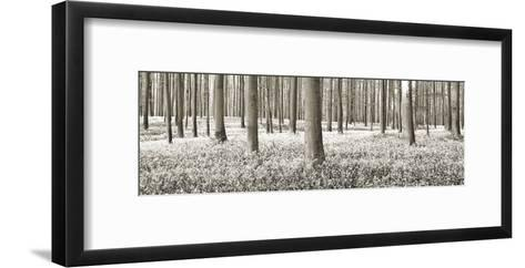 Beech forest with bluebells, Belgium-Frank Krahmer-Framed Art Print