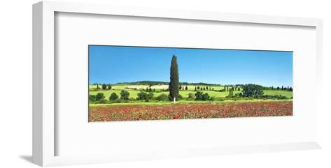 Cypress in poppy field, Tuscany, Italy-Frank Krahmer-Framed Art Print