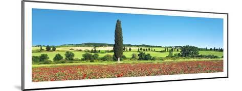 Cypress in poppy field, Tuscany, Italy-Frank Krahmer-Mounted Art Print