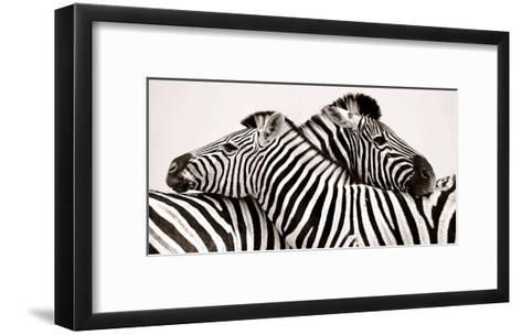 Zebras in love--Framed Art Print