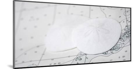 Nautical sand dollars-Savanah Plank-Mounted Giclee Print