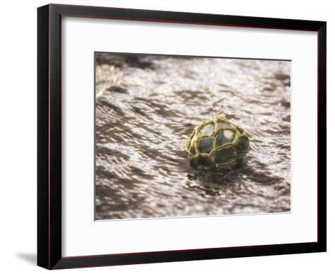Vintage glass float-Savanah Plank-Framed Art Print