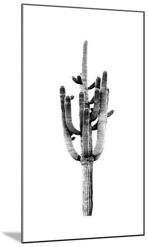 Saguaro Black & White II-Mia Jensen-Mounted Giclee Print
