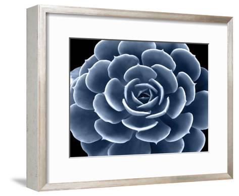 Succulent Indigo IV-Mia Jensen-Framed Art Print