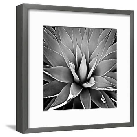 Succulent III-Mia Jensen-Framed Art Print