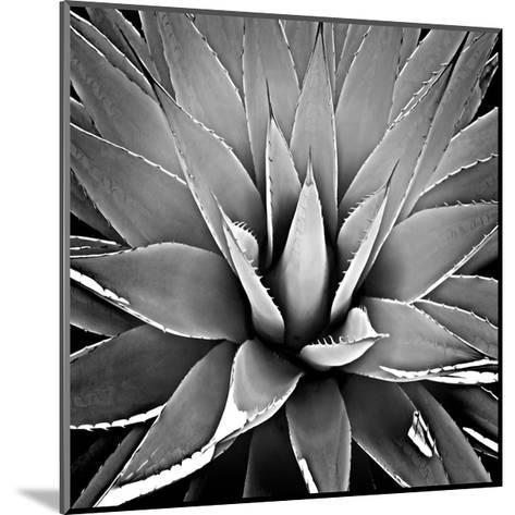 Succulent III-Mia Jensen-Mounted Giclee Print