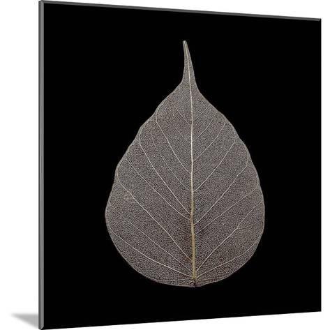 Brown Leaf-PhotoINC Studio-Mounted Art Print