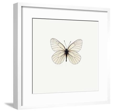 White Butterfly-PhotoINC Studio-Framed Art Print