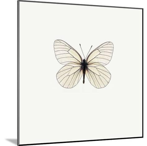 White Butterfly-PhotoINC Studio-Mounted Art Print