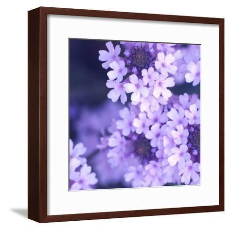 Purple Flowers-PhotoINC Studio-Framed Art Print