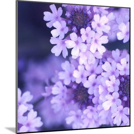 Purple Flowers-PhotoINC Studio-Mounted Art Print