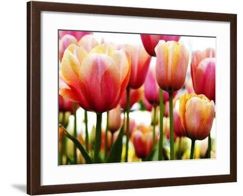Tulips-PhotoINC Studio-Framed Art Print