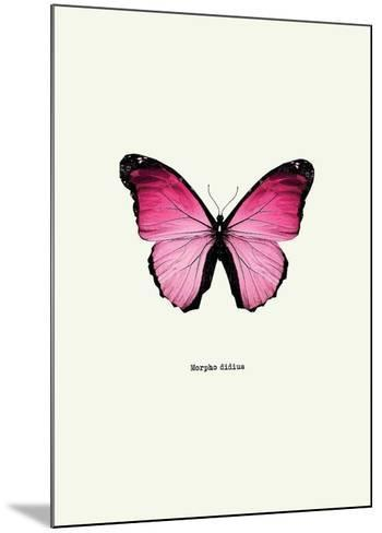 Pink Butterfly-GraphINC-Mounted Art Print