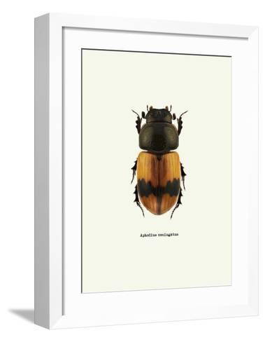 Beetle Orange-GraphINC-Framed Art Print