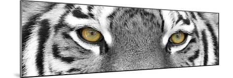 Tiger-PhotoINC Studio-Mounted Art Print