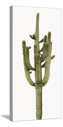 Saguaro II-Mia Jensen-Stretched Canvas Print