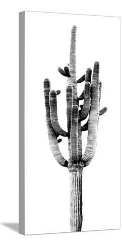 Saguaro Black & White II-Mia Jensen-Stretched Canvas Print