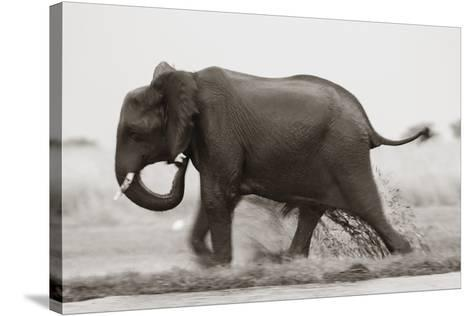 Ploughing Through--Stretched Canvas Print