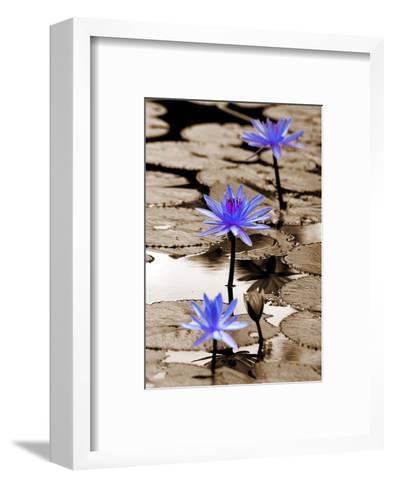 Pop of Color Lotus Flowers-Color Me Happy-Framed Art Print