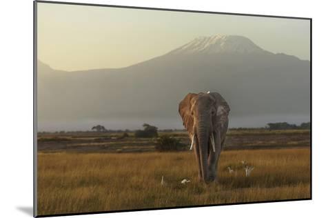 Under The Roof Of Africa-Massimo Mei-Mounted Giclee Print