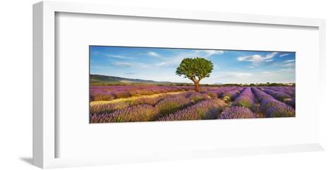 Lavender field and almond tree, Provence, France-Frank Krahmer-Framed Art Print