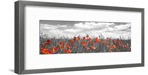 Poppies in corn field, Bavaria, Germany-Frank Krahmer-Framed Art Print