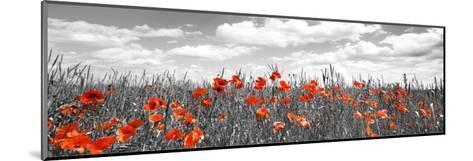 Poppies in corn field, Bavaria, Germany-Frank Krahmer-Mounted Giclee Print