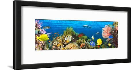 Life in the Coral Reef, Maldives-Pangea Images-Framed Art Print