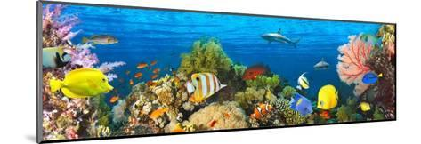 Life in the Coral Reef, Maldives-Pangea Images-Mounted Giclee Print