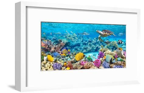 Sea Turtle and fish, Maldivian Coral Reef-Pangea Images-Framed Art Print