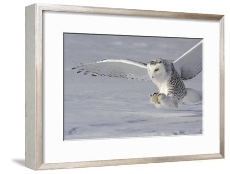 The White Hunter-Mircea Costina-Framed Art Print