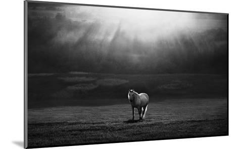 Morning Appearance-Peter Svoboda-Mounted Giclee Print