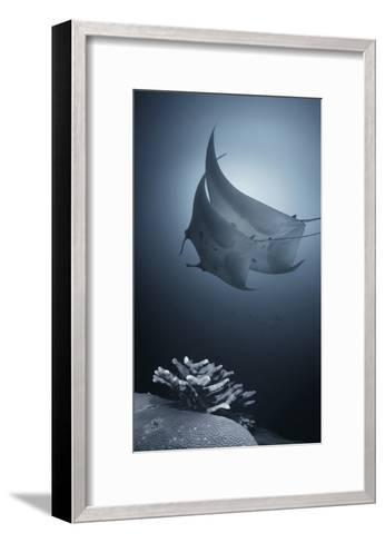 Sonata-Andrey Narchuk-Framed Art Print