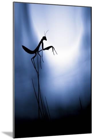 Last Night On Earth-Fabien Bravin-Mounted Giclee Print